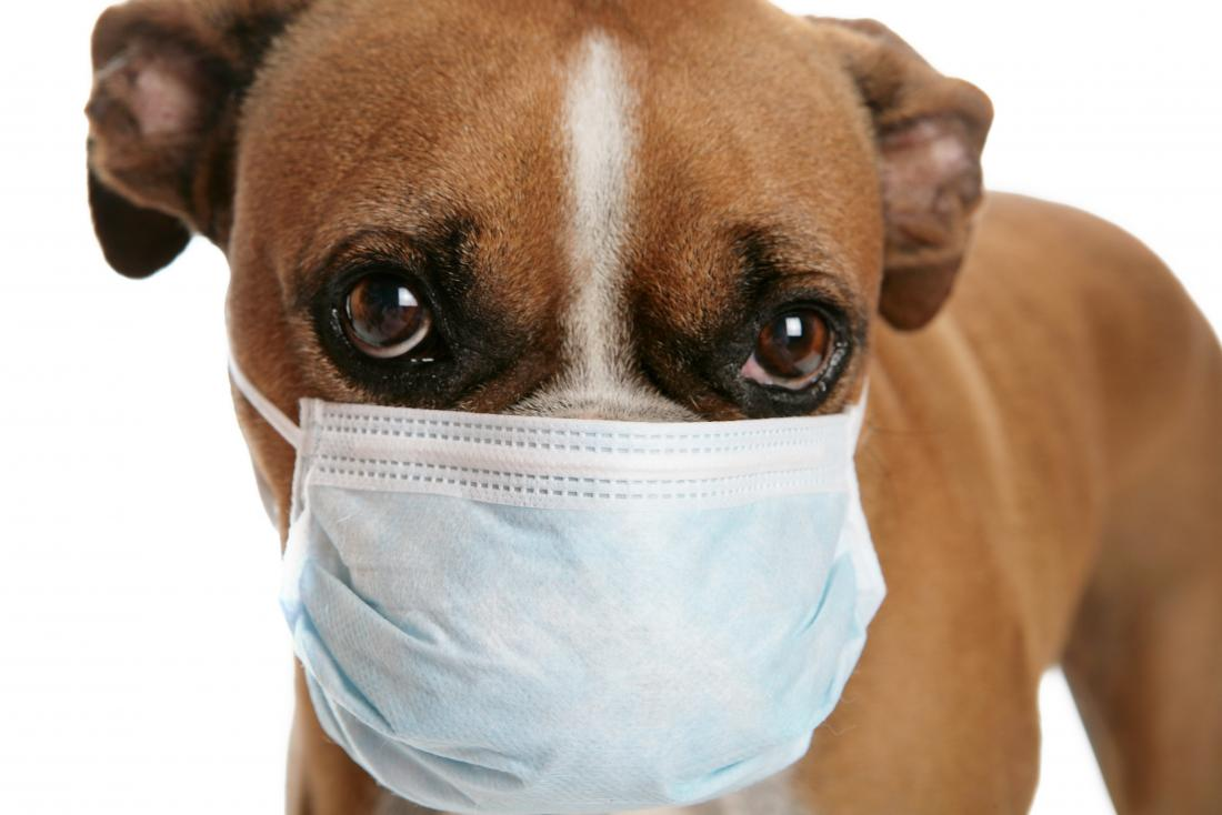 dog-wearing-medical-mask (1)